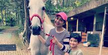 Kuda baru Nagita Slavina (Instagram/raffinagita1717)