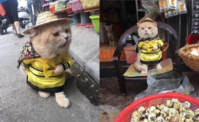 Dog terkadang juga jalan-jalan di sekitar pasar dan menjaga dagangan orang lain/copyright Le Quoc Phong