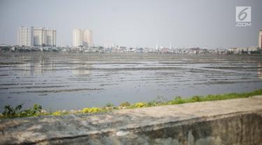 Kondisi waduk Pluit yang mengalami pendangkalan di wilayah Penjaringan, Jakarta Utara, Sabtu (8/6/2019). Endapan lumpur cukup tebal yang diperparah dengan sampah menutupi permukaan air waduk tersebut mengantarkan aroma tidak sedap. (Liputan6.com/Faizal Fanani)