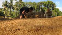 Petani merontokan gabah padi di areal persawahan Desa Ciwaru, Sukabumi, Sabtu (23/6). Petani mengeluhkan harga gabah kering panen saat ini Rp 488 ribu per kwintal dibanding tahun lalu yang menembus Rp 600 ribu per kwintal. (Merdeka.com/Arie Basuki)