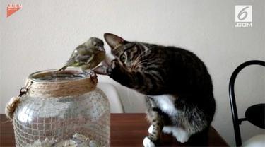 Menggemaskan, tingkah kucing saat memberikan sentuhan lembut kepada seekor burung di sebelahnya.