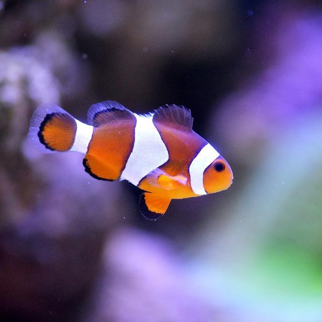 Download 5700 Koleksi Gambar Ikan Hias Dan Penjelasannya HD Terpopuler