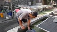 Panen ikan cupang merosot (Liputan6.com/Dian Kurniawan)