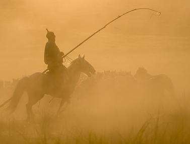 Atraksi budaya menangkap kuda