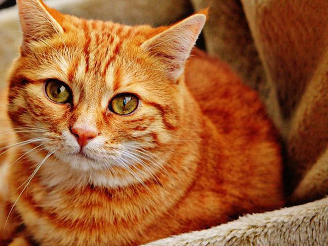50 Nama Kucing Betina Lucu Mudah Diingat Dan Menggemaskan Ragam Bola Com