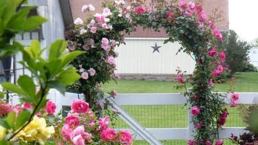 Ide Taman Bunga Mawar Rambat Buat Rumah Bagai Di Dunia Dongeng