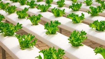 Begini Urban Farming ala Pemkot Kediri