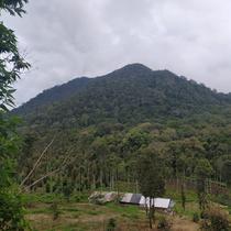 Hutan lebat kawasan wisata alam Talaga Bodas, Garut, Jawa Barat, menjadi salah satu potensi migrasi elang di pulau Jawa (Liputan6.com/Jayadi Supriadin)