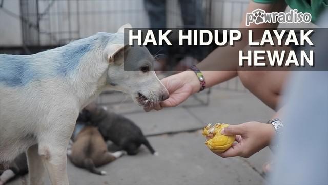 Begini kisah tentang usaha Doni Herdaru bersama Animal Defenders dalam memperjuangkan kehidupan yang lebih layak untuk seekor anjing