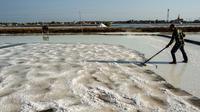 Petani memanen garam di Sidoarjo, Jawa Timur, 16 September 2019. Menurut petani, meningkatnya produksi garam saat musim kemarau dari lima ton menjadi delapan ton per minggu, mengakibatkan harga garam di tingkat petani tradisional untuk kualitas nomor satu menurun. (Juni Kriswanto/AFP)