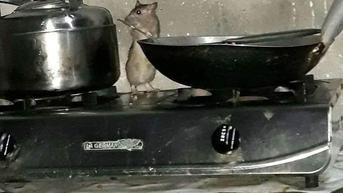 8 Potret Kelakuan Ajaib Tikus di Rumah, Bikin Geli Lihatnya