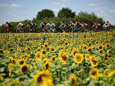 Para pebalap Tour de France saat melintas deretan bunga Matahari pada etape keempat dengan jarak tempuh 207,5 km antara Mondorf-les-Bains dan Vittel, (4/7/2017). (AFP/Lionel Bonaventure)