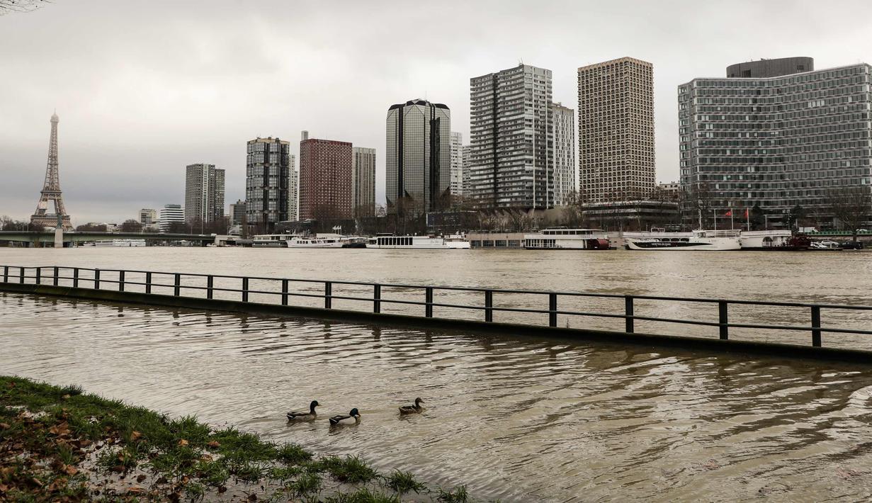Bebek terlihat di tepi sungai Seine yang banjir di dekat menara Eiffel dan distrik Beaugrenelle, Paris (23/1). Tingkat sungai Seine naik ke ketinggian 4.57 meter (15 kaki), beberapa meter lebih tinggi dari tingkat normalnya. (AFP Photo/Ludovic Marin)