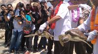 Didampingin Wali Kota Batam Amsakar Achmad, Arief Yahya melepasliarkan hewan dilindungi itu dalam kunjungannya ke Resor Kepri Coral. (Liputan6.com/ Ajang Nurdin)