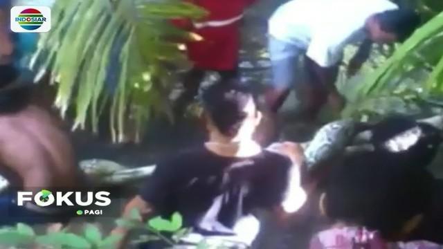 Ular piton berukuran besar kembali ditemukan warga Muna, Sulawesi Tenggara. Ular dengan panjang lebih dari 7 meter tersebut ditemukan di Desa Langkumapo, tengah menyeberang sebuah sungai.