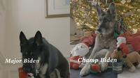 Anjing peliharaan Joe Biden, Champ dan Major, muncul dalam video Natal 2020. (dok. tangkapan layar Twitter @JoeBiden)