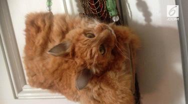 Wanita asal Selandia Baru itu menyulap bangkai kucing menjadi sebuah tas.