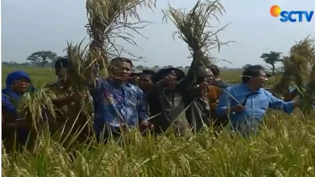 Seharusnya impor beras dilakukan jika Indonesia dilanda kekeringan terutama akibat badai El Nino yang sebenarnya jarang terjadi.