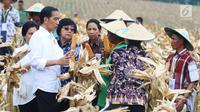 Presiden Joko Widodo bersama Menteri BUMN Rini Soemarno dan Menteri Lingkungan Hidup dan Kehutanan Siti Nurbaya Bakar berdialog dengan petani saat panen raya jagung di Perhutanan Sosial, Ngimbang, Tuban, Jumat (9/3). (Liputan6.com/Angga Yuniar)