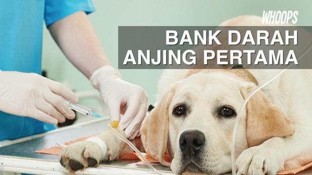 Tak hanya anjing, pihak setempat juga berencana menyediakan bank darah untuk kucing dan binatang lainnya.