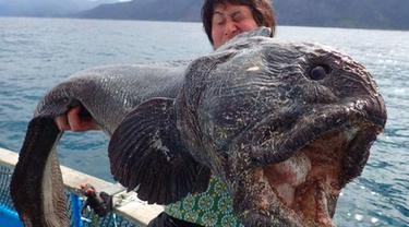 Ikan tersebut dikenal sangat menakutkan dengan kepala besar dan mulut menganga.