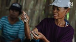 Pekerja memilih cicak di rumah industri kawasan Cirebon, Jawa Barat, Selasa (2/4). Cicak kering ini dijual dengan harga Rp 250 ribu per kilogram. (Liputan6.com/Herman Zakharia)