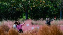 Sejumlah wanita berswafoto di tengah hamparan rumput muhly merah jambu di Taman Olimpiade di Seoul, Korea Selatan (15/10/2020). Korsel memutuskan untuk menurunkan pedoman jaga jarak sosial tiga tingkatnya ke level terendah setelah angka harian kasus COVID-19 relatif rendah.  (Xinhua/Wang Jingqiang)