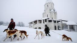 Dua orang melintasi tumpukan salju sambil membawa anjing Barzoi greyhound mereka di dekat sebuah katedral di Kolomenskoye, Moskow (4/2). Badai salju lebat melanda hampir seluruh wilayah Moskow, Rusia. (AFP/Yuri Kadobnov)