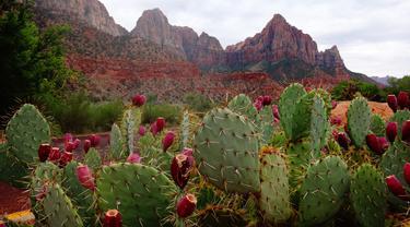 Daun kaktus bisa diubah menjadi bahan kulit ramah lingkungan/dok. Unsplash George