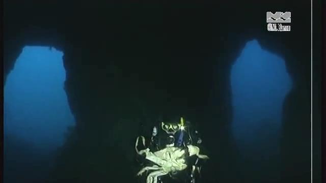 Beginilah penampakan kepiting paling berat sedunia.