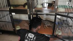 Penjaga hotel atau cat boy memberi minum kucing-kucing peliharaan yang dititipkan di Hotel Kucing Mimo, Jakarta, Rabu (29/5/2019). Hotel Kucing Mimo memiliki 25 unit kamar yang terdiri dari tiga jenis. (merdeka.com/Iqbal Nugroho)