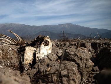 Dilanda Kekeringan Parah, Danau Aculeo Lagoon Chile Mengering