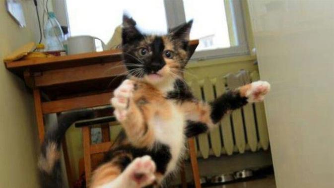 Ketika Kucing Berubah Wujud Jadi Ninja Fashion Fimela Com