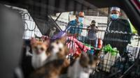 Penampakan Mobil Penuh dengan Kucing (Facebook/Ebit Lew)