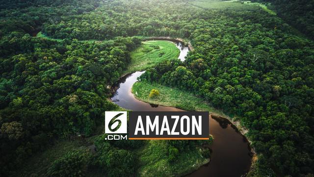 Ahli ekologi Oxford University Yadvinde Malhi memberi penjelasan. Efek oksigen Amazon bagi bumi sekitar 0%.