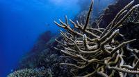 Susunan terumbu karang di Great Barrier Reef, Australia. (dok. unsplash @hoelk)