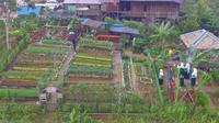 Dasawisma Asoka, satu dari 84 dasawisma di Desa Batuah, Kecamatan Loa Janan, Kabupaten Kutai Kartanegara yang memiliki kebun indah.