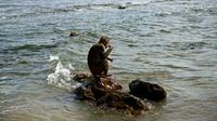 Seekor monyet makan di atas batu pantai Cayo Santiago, yang dikenal sebagai Pulau Monyet, di Puerto Rico, 4 Oktober 2017. Setelah puluhan tahun berada di tempat tersebut, populasi monyet di Cayo Santiago meningkat menjadi ribuan. (AP/Ramon Espinosa)