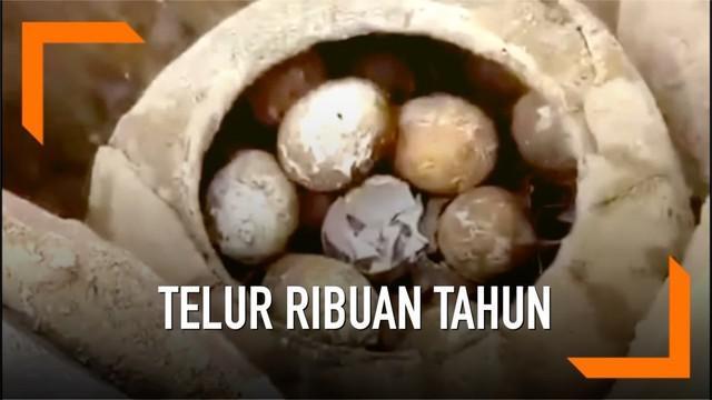 Arkeolog China menemukan satu toples telur berusia 2500 tahun di makam kuno. Ini merupakan penemuan kelima di makam kuno tersebut.