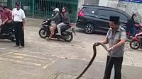 Engkong Cobra bersama king cobra 3 meter yang ditangkap di Padurenan, Mustikajaya Bekasi.(Liputan6.com/Bam Sinulingga)