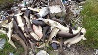 Ratusan ekor ikan hiu yang dipelihara di Karimunjawa ditemukan mati mendadak. (foto: liputan6.com / felek wahyu)