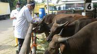 Petugas Pusyankeswannak Dinas KPKP DKI Jakarta melakukan pengawasan pemeriksaan kesehatan  hewan kurban di Rumah Potong Hewan (RPH) Cakung, Jakarta, Jumat (10/7/2020). Kegiatan ini dilakukan untuk kesejahteraan hewan di tempat penampungan. (merdeka.com/Imam Buhori)