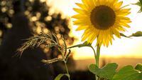 Plant illustration |  Pixabay