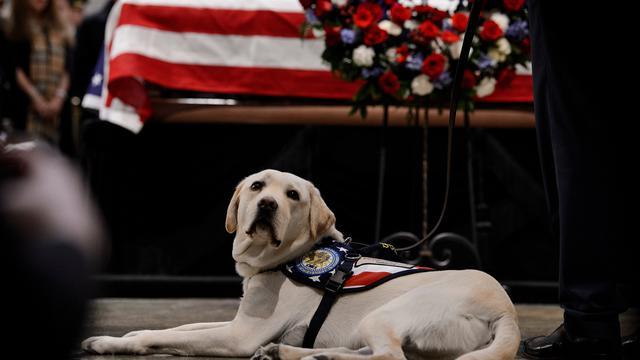 Sully, Anjing Peliharaan George HW Bush