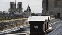 Tiga sarang lebah selamat dari kebakaran Katedral Notre Dame di Paris (AFP/Patrick Kovarik)