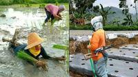 6 Aksi Kocak Emak-Emak saat di Sawah Ini Bikin Elus Dada (sumber: Instagram.com/awreceh.id dan Instagram.com/receh.id)