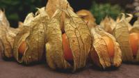 Buah Ciplukan yang sudah matang (dok. Pixabay/Alexas_Fotos/Fairuz Fildzah)