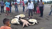 Anggota Polsek kalukku melaspakan 5 ekor penyu yang menjadi barang sitaan dari dua orang petani rumput laut (Foto: Liputan6.com/Istimewa)