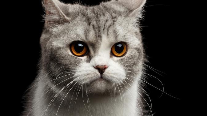 5 Penyakit Kucing Yang Wajib Diketahui Oleh Pecinta Kucing Citizen6 Liputan6 Com