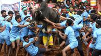 Para peserta festival Jallikattu berusaha untuk mengendalikan seekor banteng di desa Palamedu, pinggiran kota Madurai, di negara bagian Tamil Nadu sebelah selatan, 16 Januari 2019 (AFP)